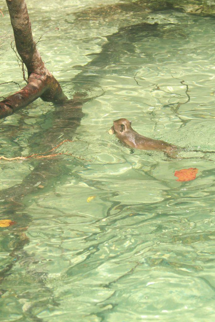 Monkey-Island-Phi-Phi-Islands-near-Krabi-and-Phuket-Thailand-5-683x1024.jpg
