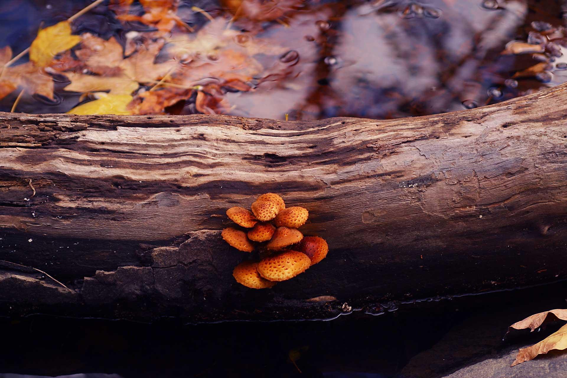 bruce berg fine art photography-5.jpg