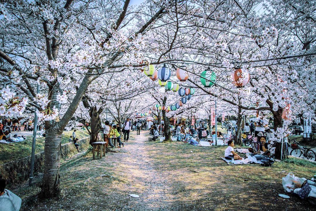 Osaka - courtesy & copyright © @kento.lab