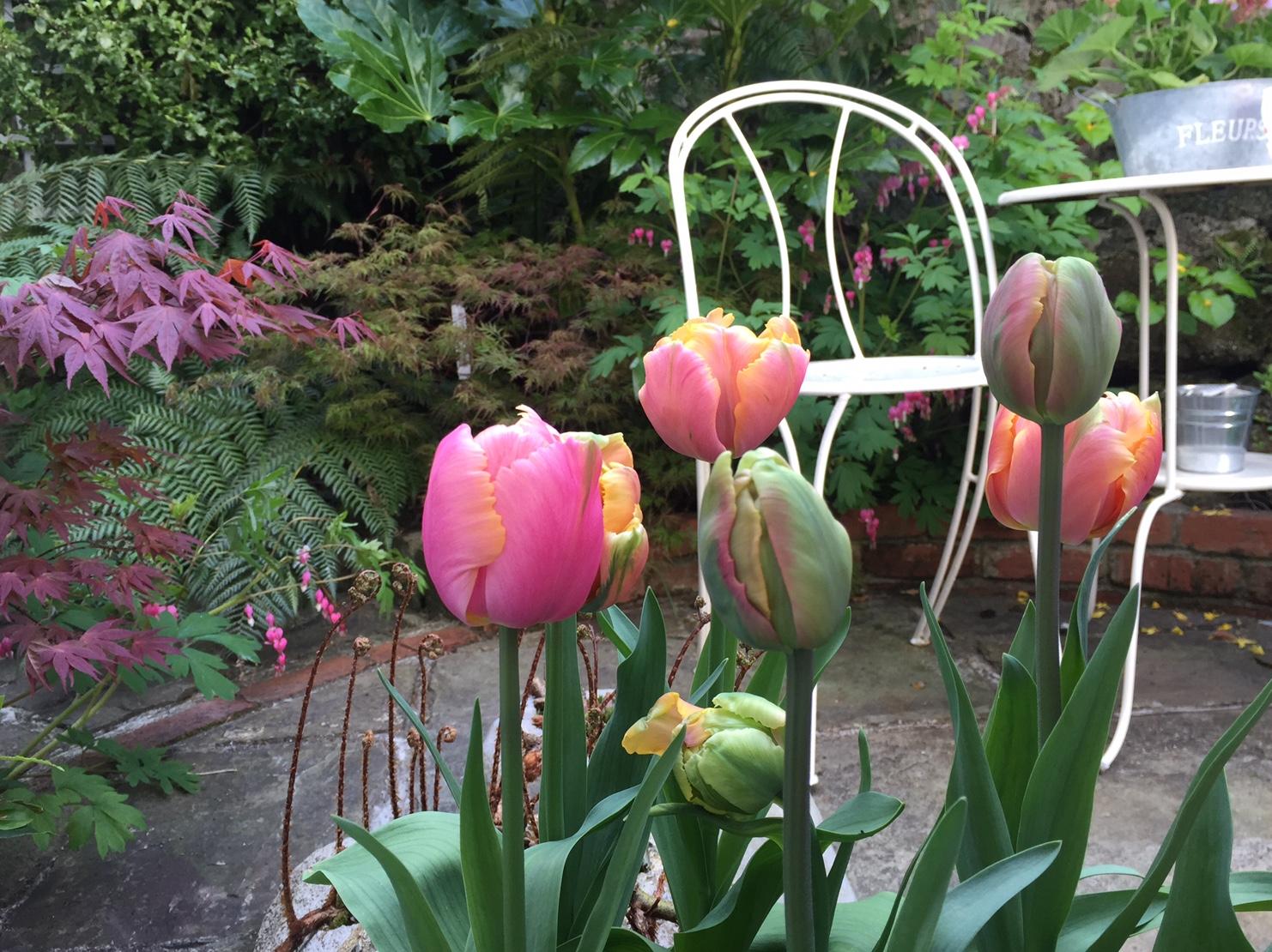 Propagating Dan Garden Design