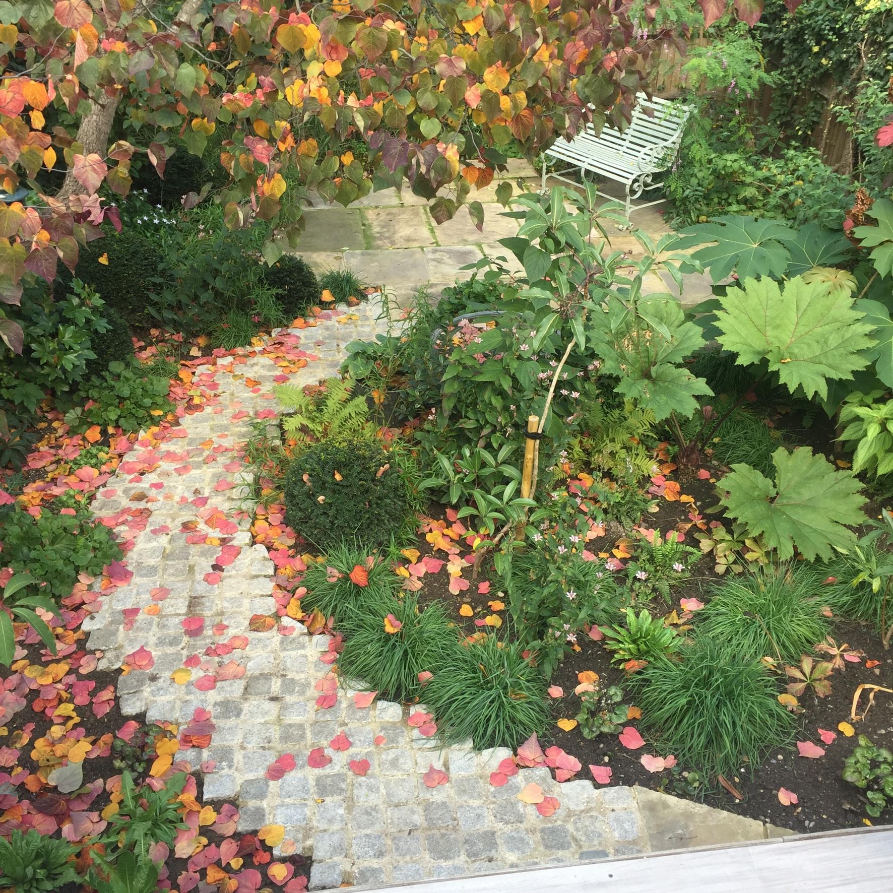 Propagating Dan Garden Design Barbican London