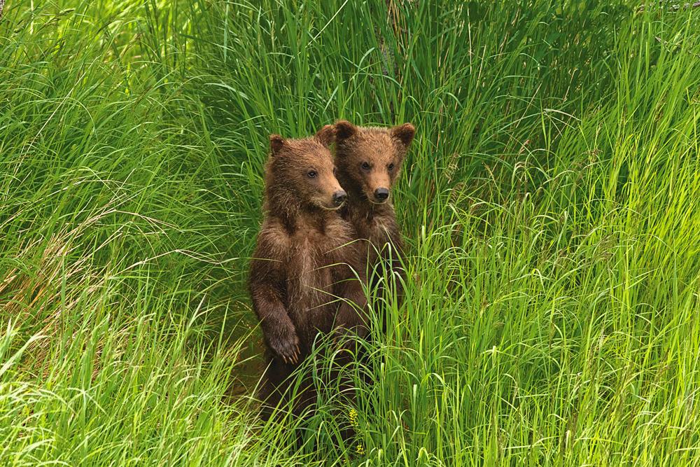 CubsInGrass_web.jpg