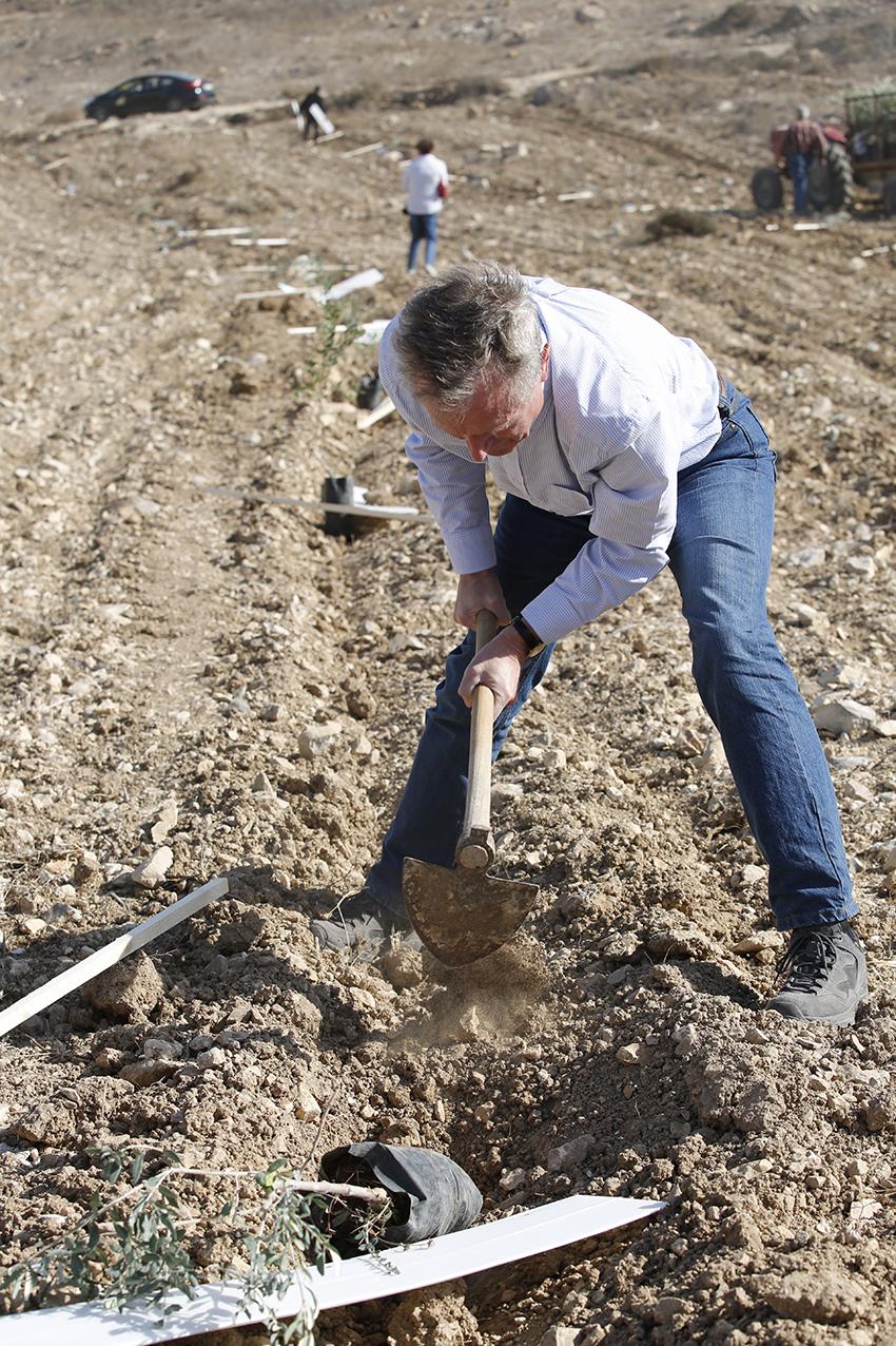 Erik Ader plant een van de 1100 olijfbomen in Far'ata