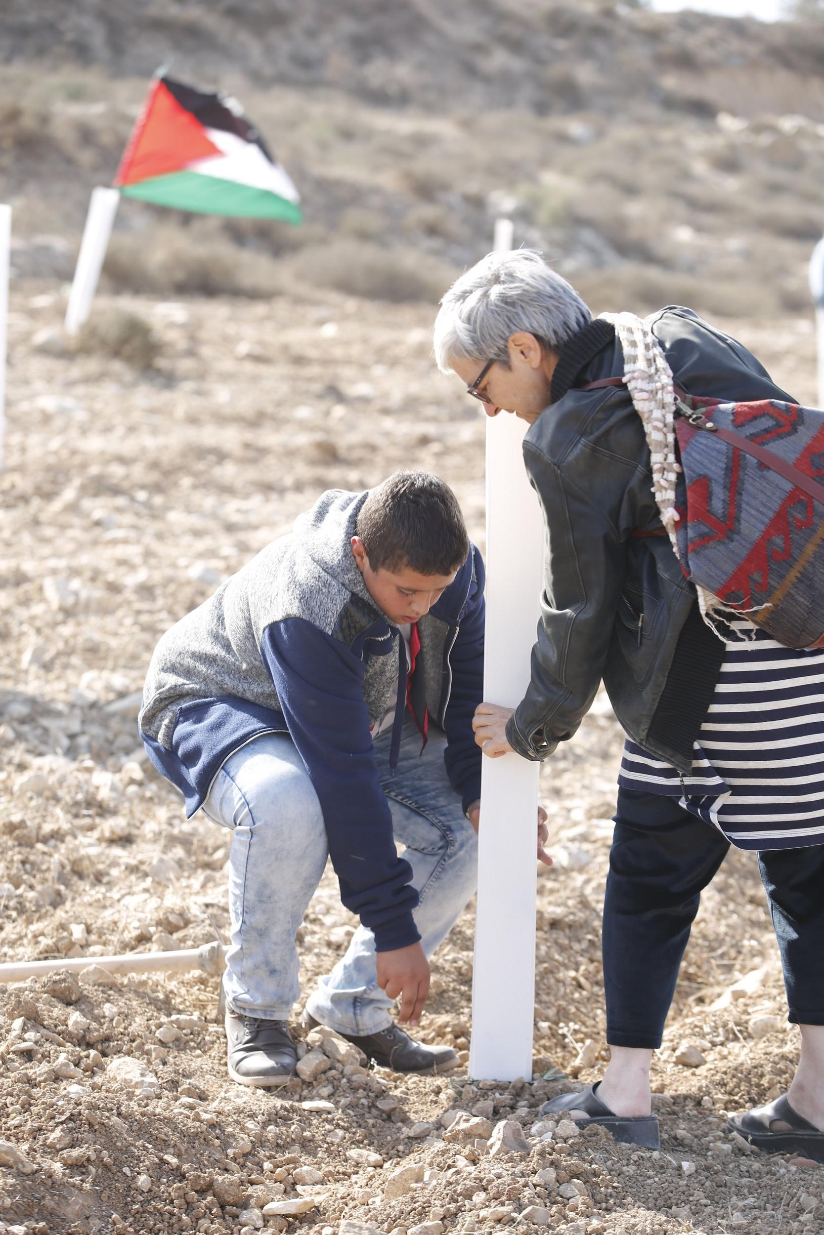 Angela Godfrey hielp Plant een Olijfboom met het helpen van  1100 olijfbomen voor Dominee Ader , nov 2016 Foto Haitham Khatib/Plant een Olijfboom