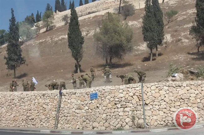 soldiers uproot trees Jlem 2.jpg