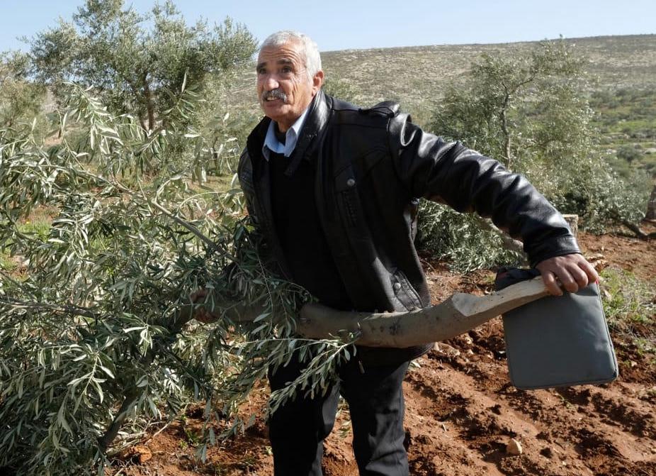 Abed al Hai Na'asan, met een omgehakte olijfboom. Foto: Alex Levac