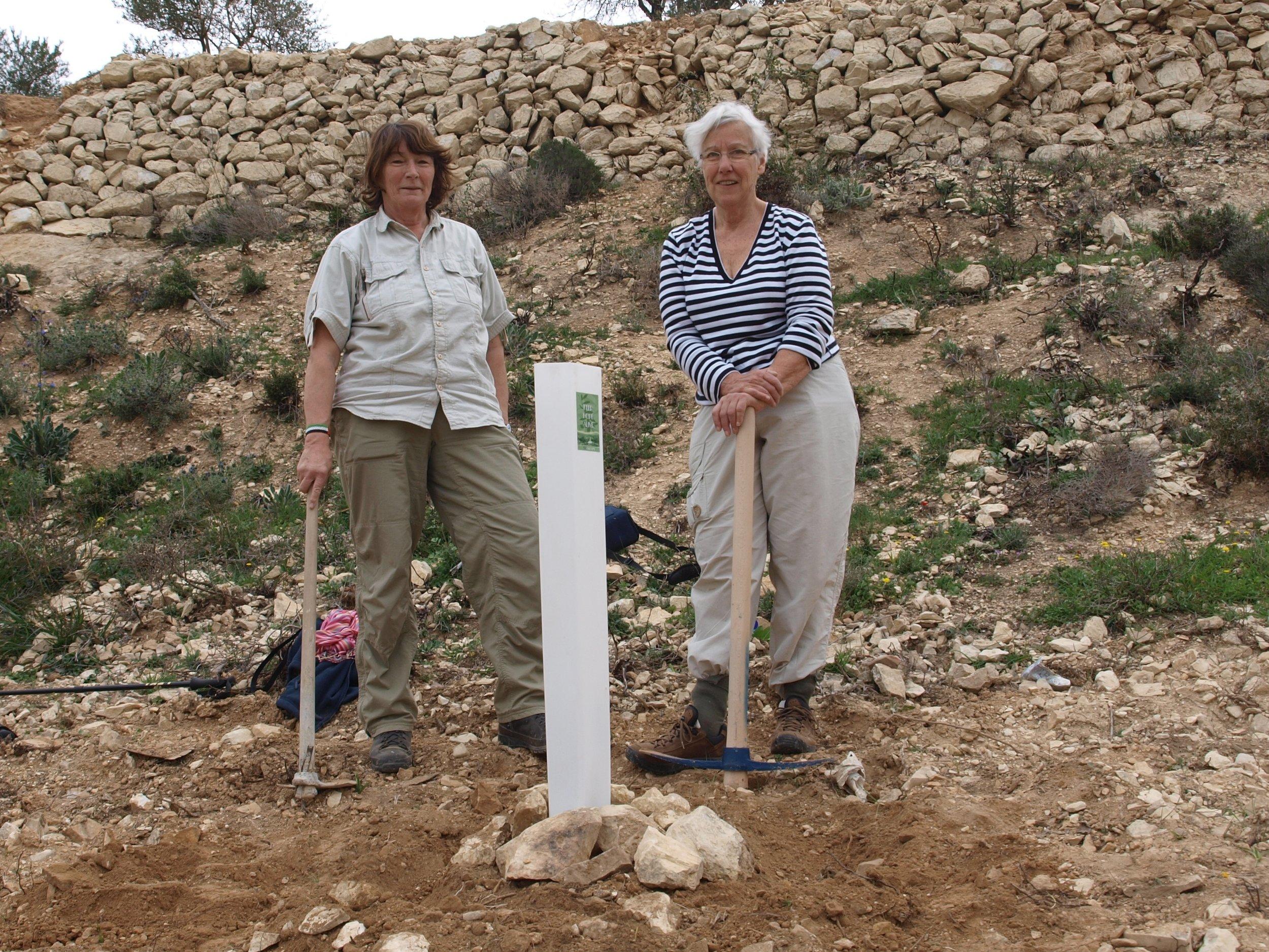 Marijke en Rita bij een geplantte olijfboom