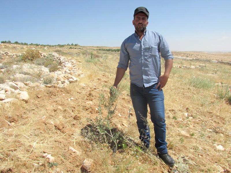 200 olijfbomen van Ayman Ghazal (30) werden vernield door kolonisten. En een weg voor kolonisten werd vlakbij zijn land aangelegd. In 2018 ontving Ayman 40 olijfbomen, 10 daarvan staan op Naima's naam