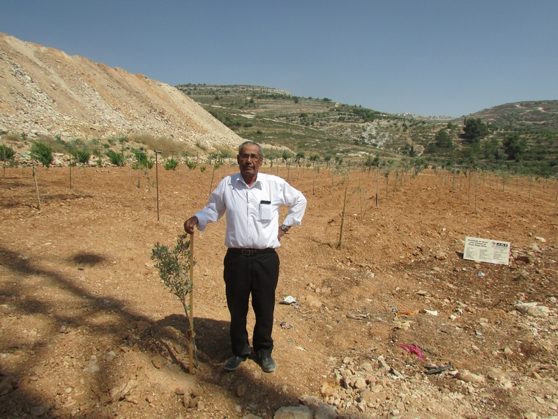 Ahmad Hamamrah (64) uit Housan heeft een familie van zes. 200 meter van zijn land is een nederzetting gebouwd en een kolonistenweg 500 meter. Om hem te steunen ontving hij in 2017 80 olijfbomen, 15 zijn door Naima gesponsord