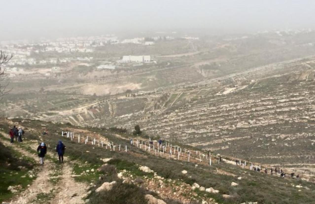 Reizigers van de Plantreis planten bomen in de vallei