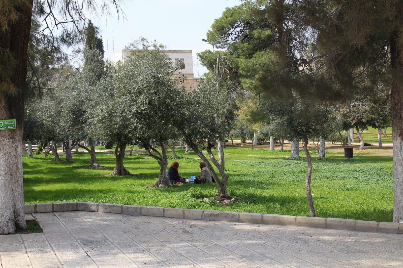 Olijfbomen bij Masjid al Aqsa
