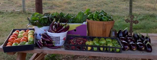 October Harvest at the garden!