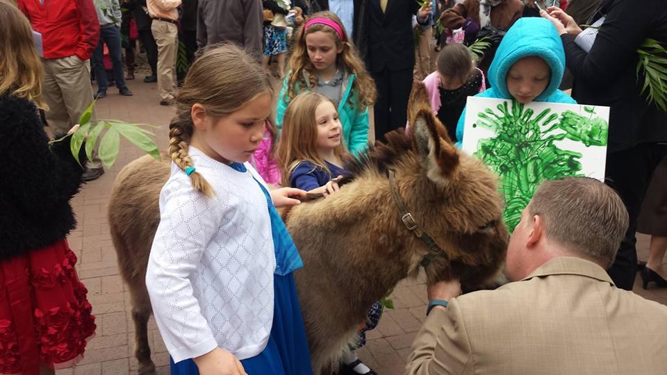 Donkey Walk 2.jpg