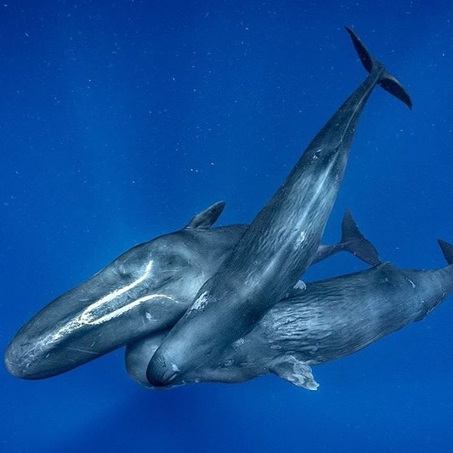 Let's make a pledge to use less plastic and support our ocean's in 2019.  Photo: @brianskerry . . . .⠀ .⠀ .⠀ .⠀ .⠀ .⠀ .⠀ #justgoshoot #peoplescreatives #sustainability #environment #innovation #climatechange #business #economy #calledtobecreative #entreprenuerspirit #stayandwander #change #ocean #whale #imaginebetter #livefolk #profitredefined ⠀ #newyear #travel #inspire #tech #agency #ourplanetdaily #liveauthentic #theoutbound #exploretocreate #lifeofadventure #roamtheplanet #modernoutdoors