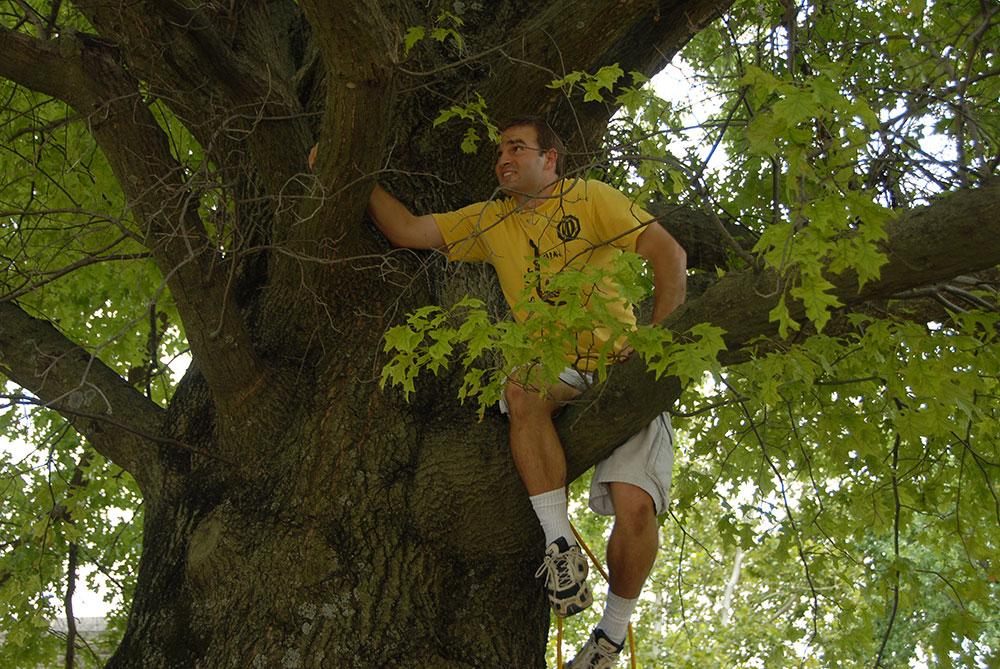 simon_tree_04.jpg