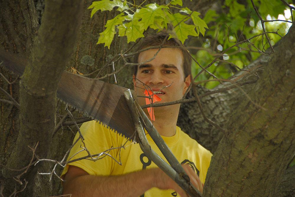 simon_tree_05.jpg
