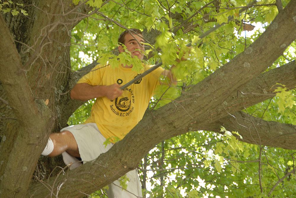 simon_tree_06.jpg