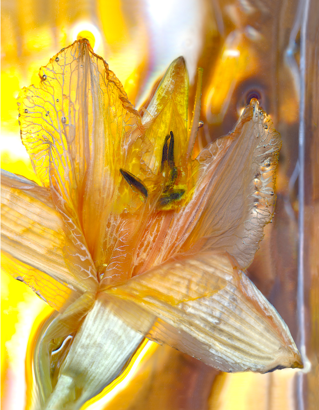 Yellow Petals in Light