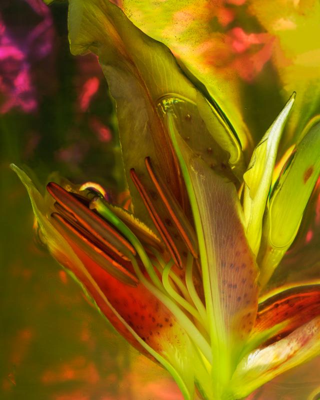 Tropical Lily Pod