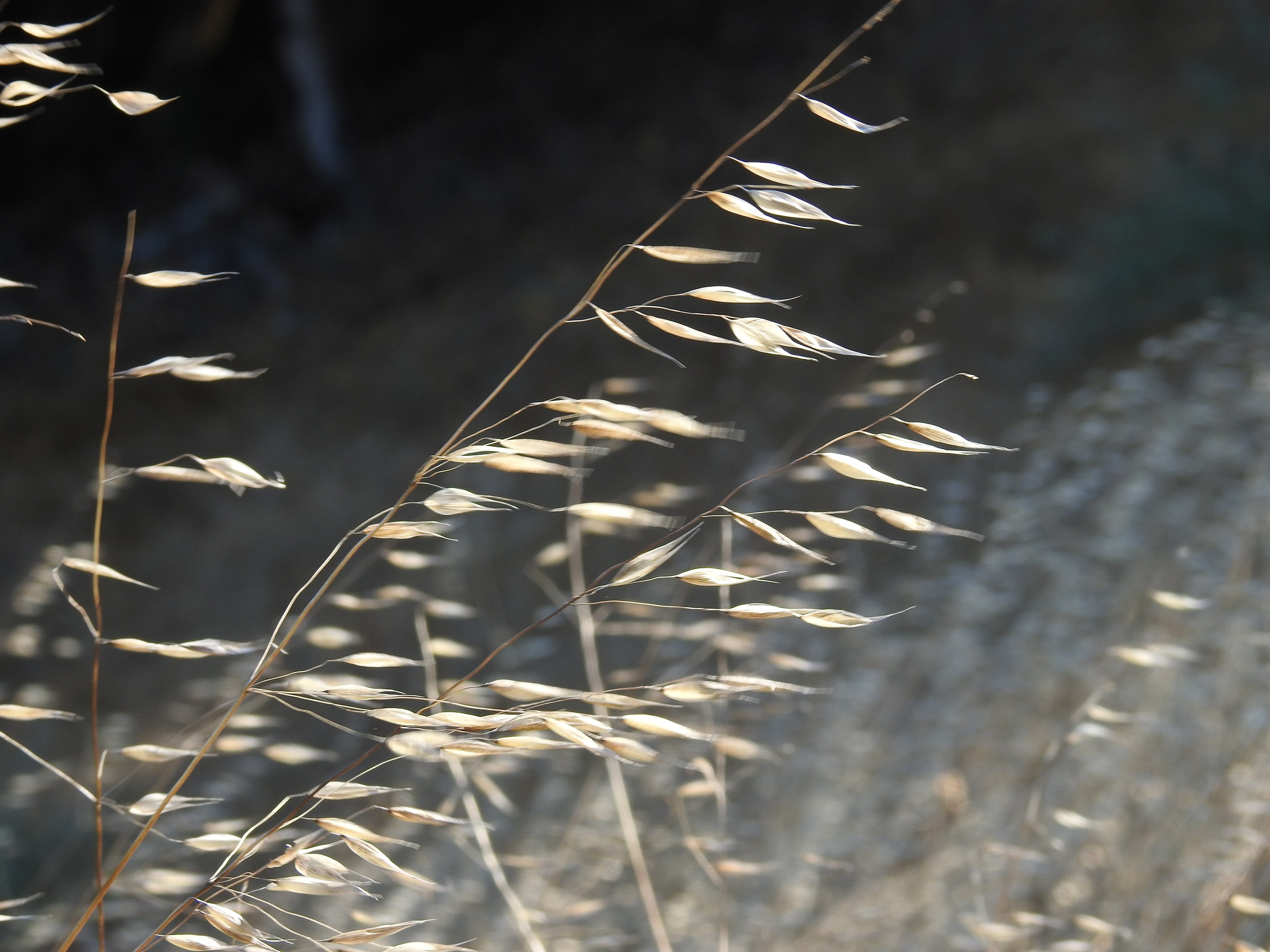 Sun, wind and weeds: seeing the invisible through its effects on matter
