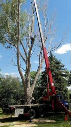 Fort Collins Tree Removal.jpg