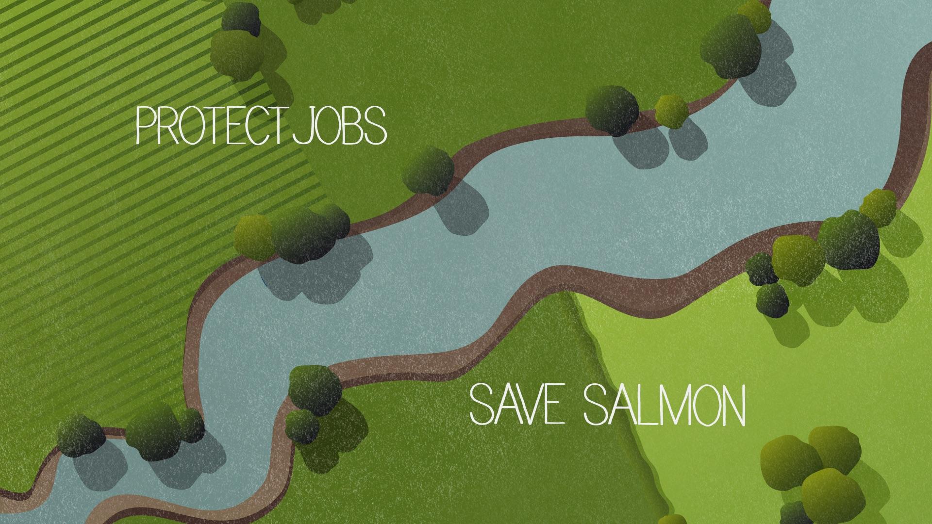 Salmon 5.jpeg
