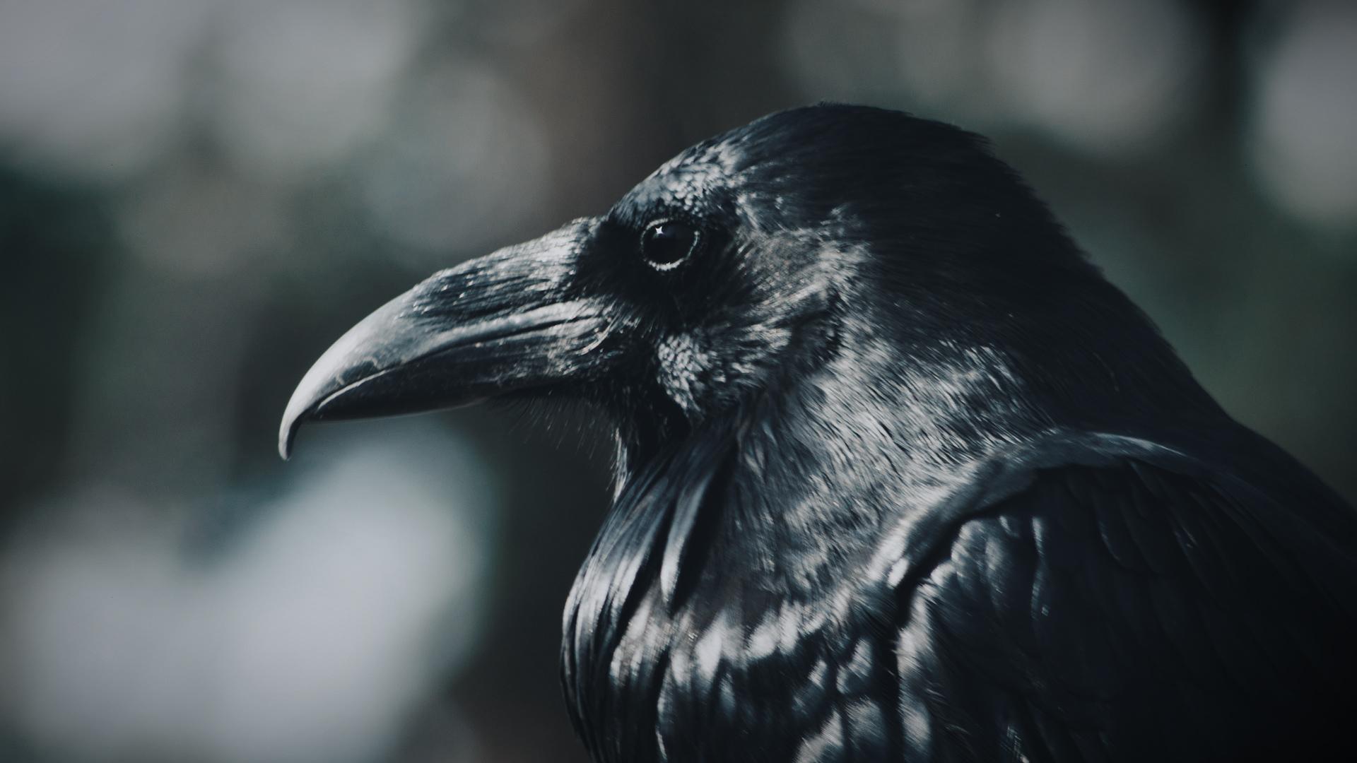 Sparrow 15.jpg