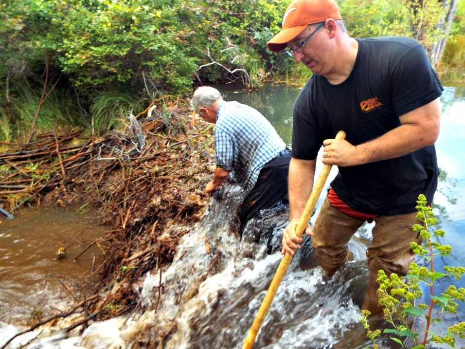Robert Hughes, EPCAMR Executive Director and Jim Wetzel, from Weatherly Borough Planning Commission, remvoing one of several beaver dams on an AMD impacted stretch of the Hazlebrook Creek in the Upper Lehigh River portion of the Delaware River. The stream is impacted by high levels of aluminum and acidity (which gives the stream color a clear look with a hint of gray) and has issues with flooding around several active railroad lines that cross it due to the flashy nature of the underground mine pool in this area of the watershed that is currently being monitored by many partners in the watershed