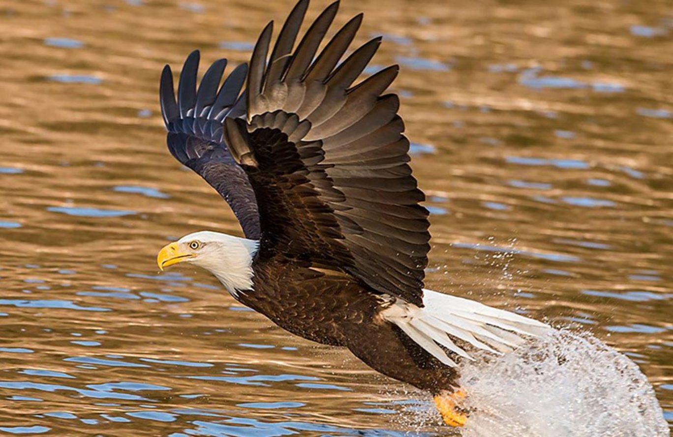eagle-party-1368x889.jpg