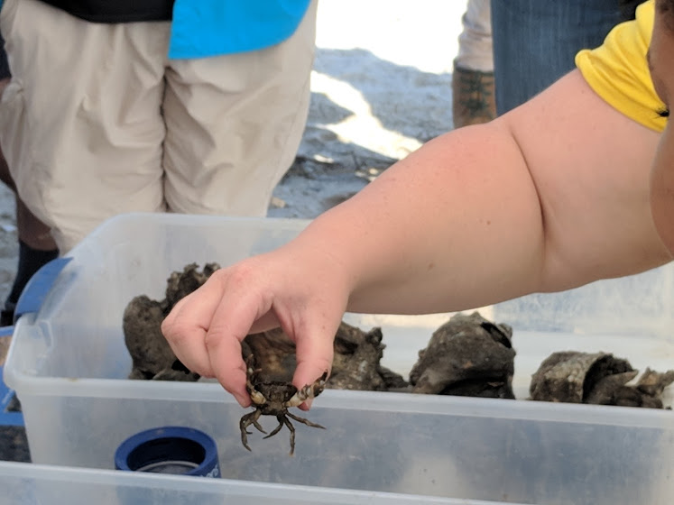 American Littoral Society hosted a field trip that taught attendees about oyster reef restoration taking place in the Delaware Bay.