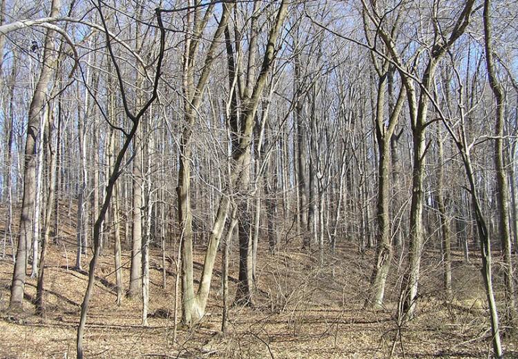 winter-trees-event.jpg