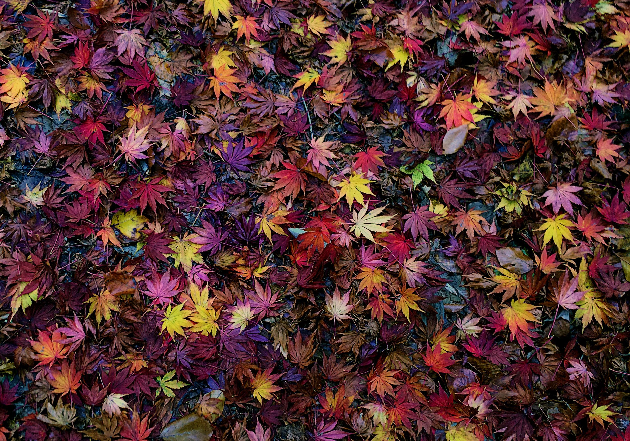 Fall-leaves-Andorra-10x7.jpg