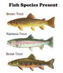 The Eastern Branch of the Delaware River in New York State is located in Delaware County and contains brown trout, rainbow trout, and brook trout. Source: NYSDEC