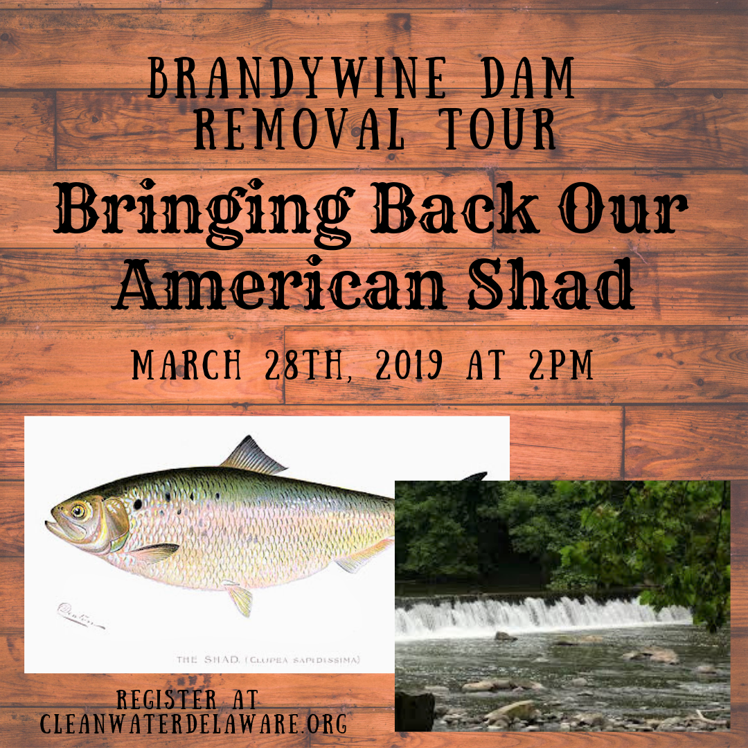 Brandywine Dam Removal Project Tour.png