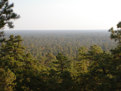 Pinelands National Reserve (NJ)