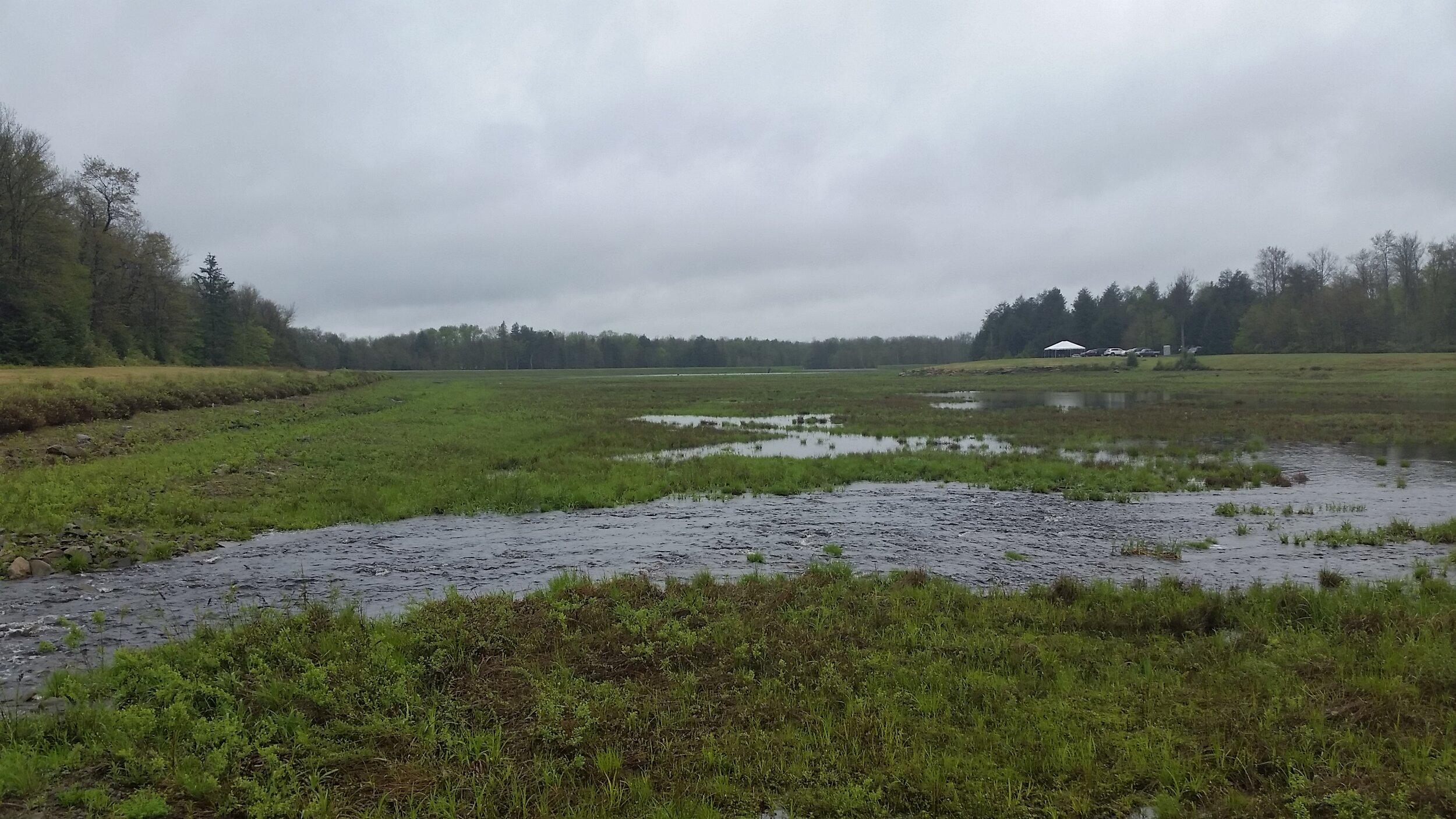 20180522 Wetlands on Klondike Property.jpg
