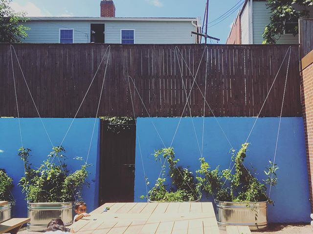 We're proud to donate our services to a great cause like Calvary Women's Shelter, designing and planting a greenwall of climbing vines!  Thanks to the local @usgbc chapter for getting us involved! . #courtyard #steelplanters #vines #steelcables #greenwall #vinewall #trellis #cabletrellis #climbingvibes #landscapedesign #urbangarden #landscapearchitecture #courtyardgarden #verticalgarden #ediblevines #dcdesign #designbuild #volunteerwork #volunteerbuild @acreativedc