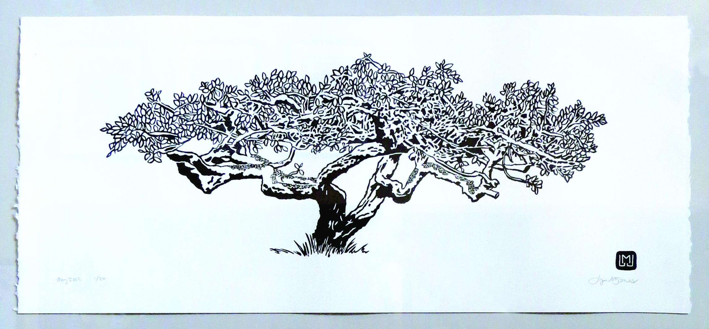Fern Cottage Plum Tree, 2015