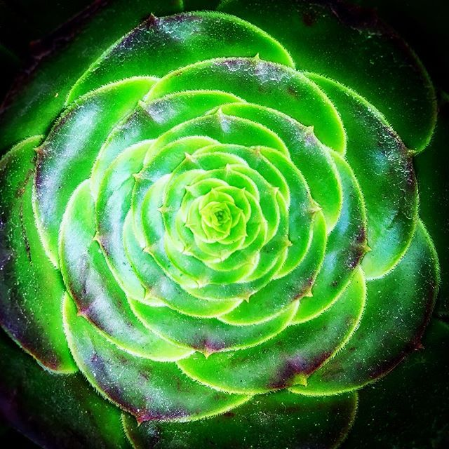 Nature. This puts me in a trance. #Fibonacci