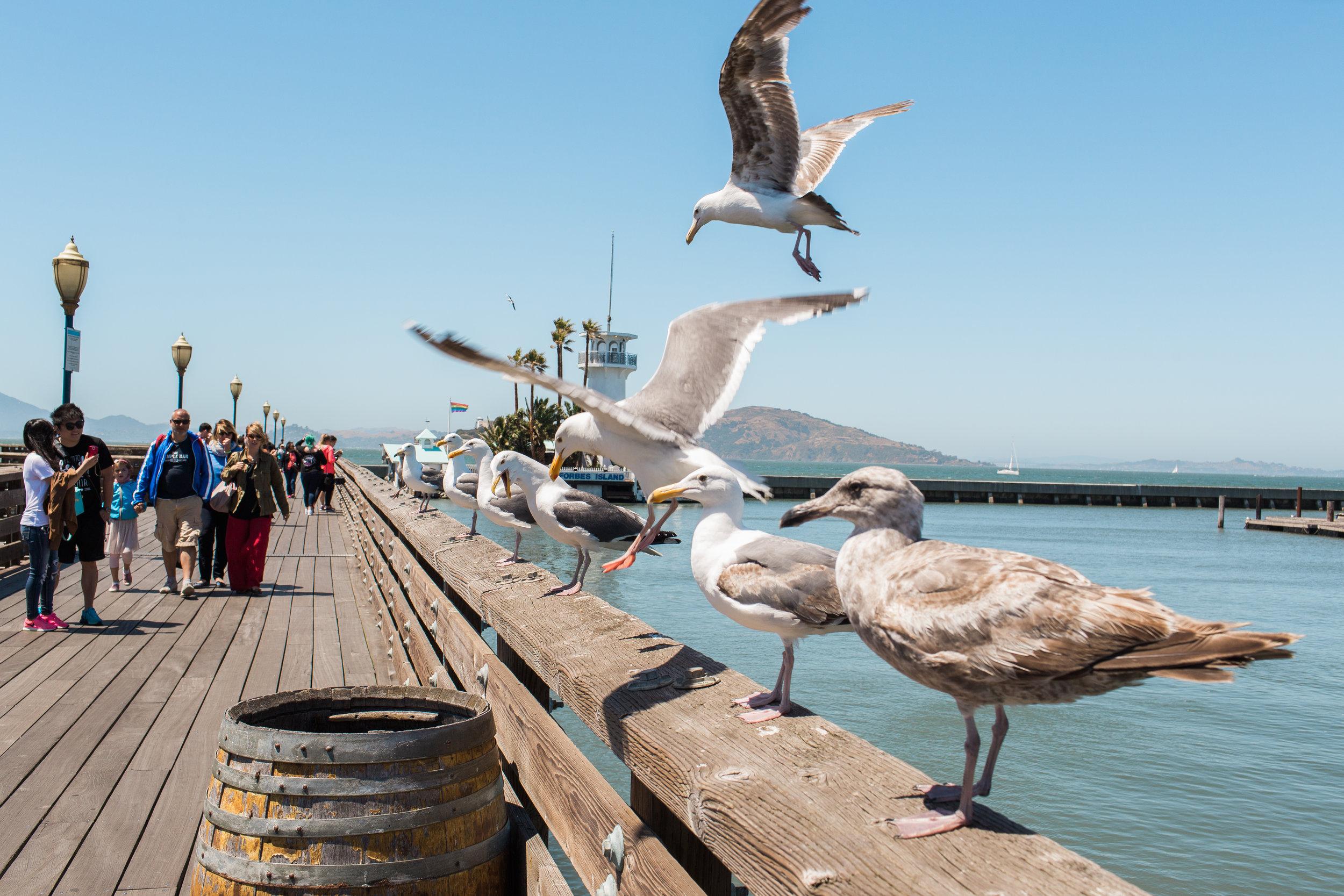 Wanderlust California: San Francisco Pier