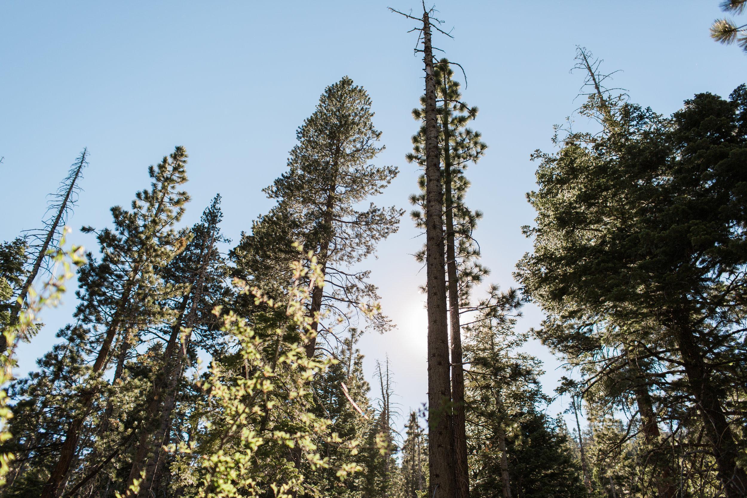Wanderlust California: Lake Tahoe
