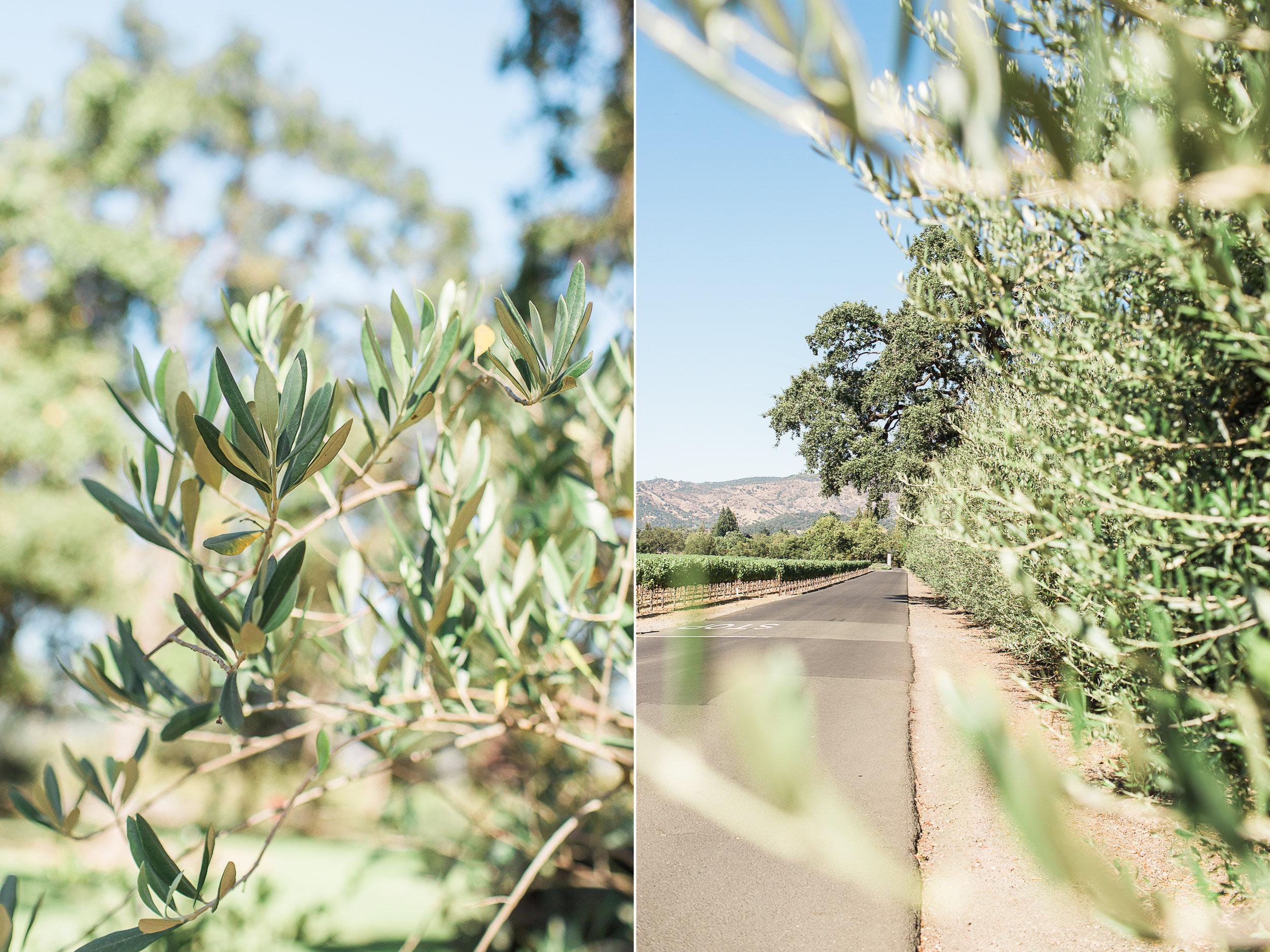 Wanderlust California: Napa Valley Vineyards
