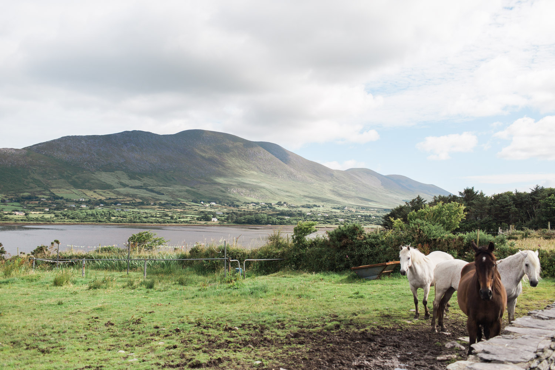 Ireland (93 of 185).jpg