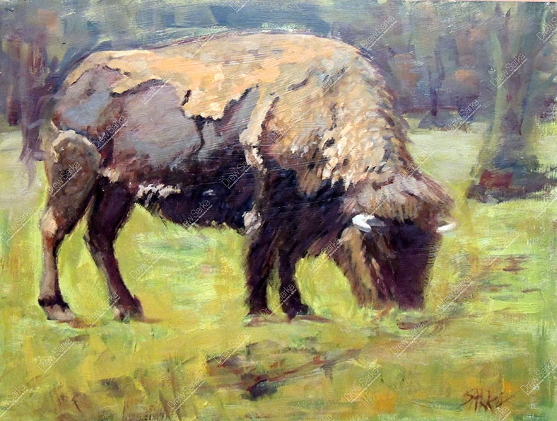 American Bison,18x24