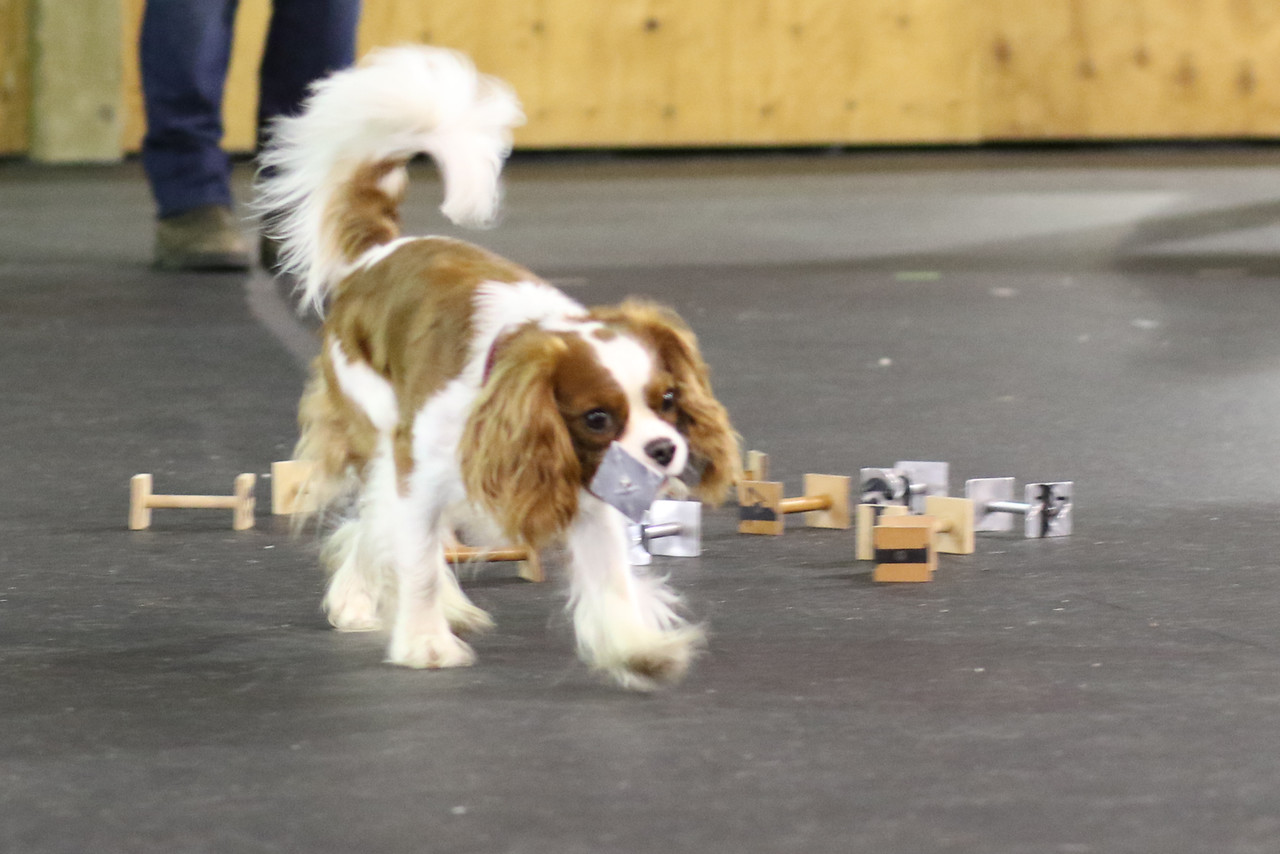 Top Dog Canine Training - Puppy Training Vancouver