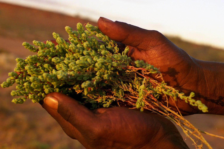 Bush Medicine
