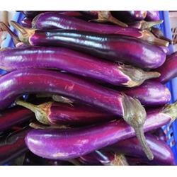 Ping Tung Long Eggplant-250.jpg
