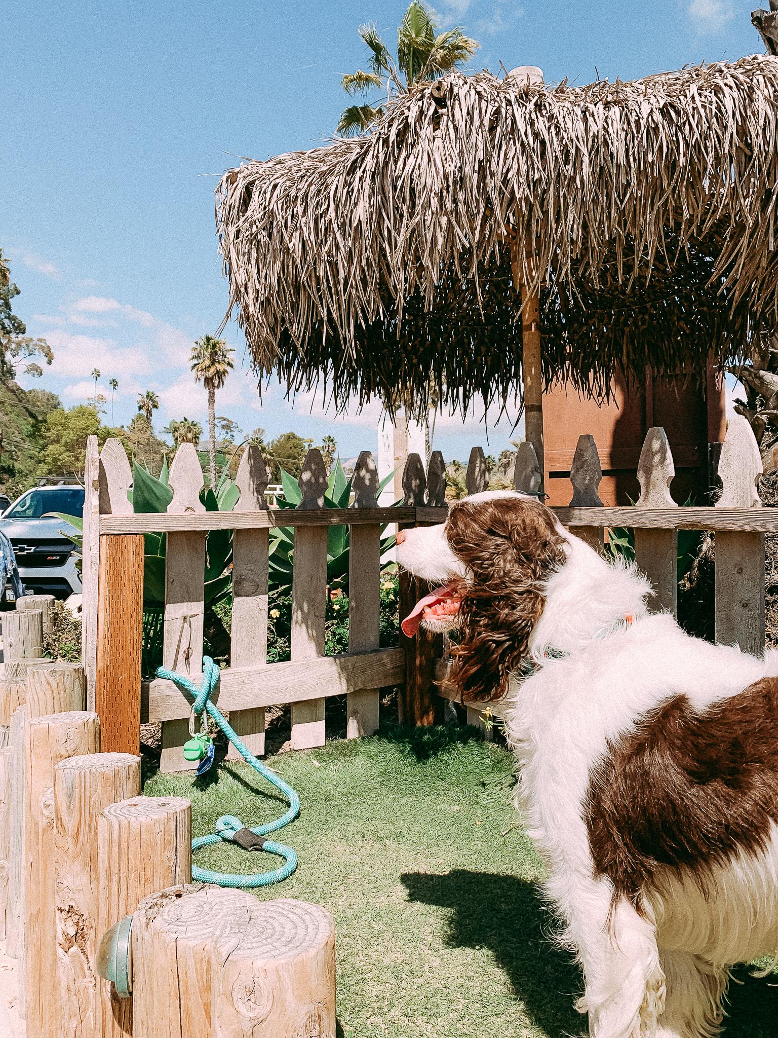 hendrys beach santa barbara california
