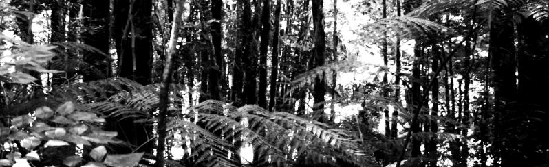 Valdivian_temperate_rainforest.jpeg
