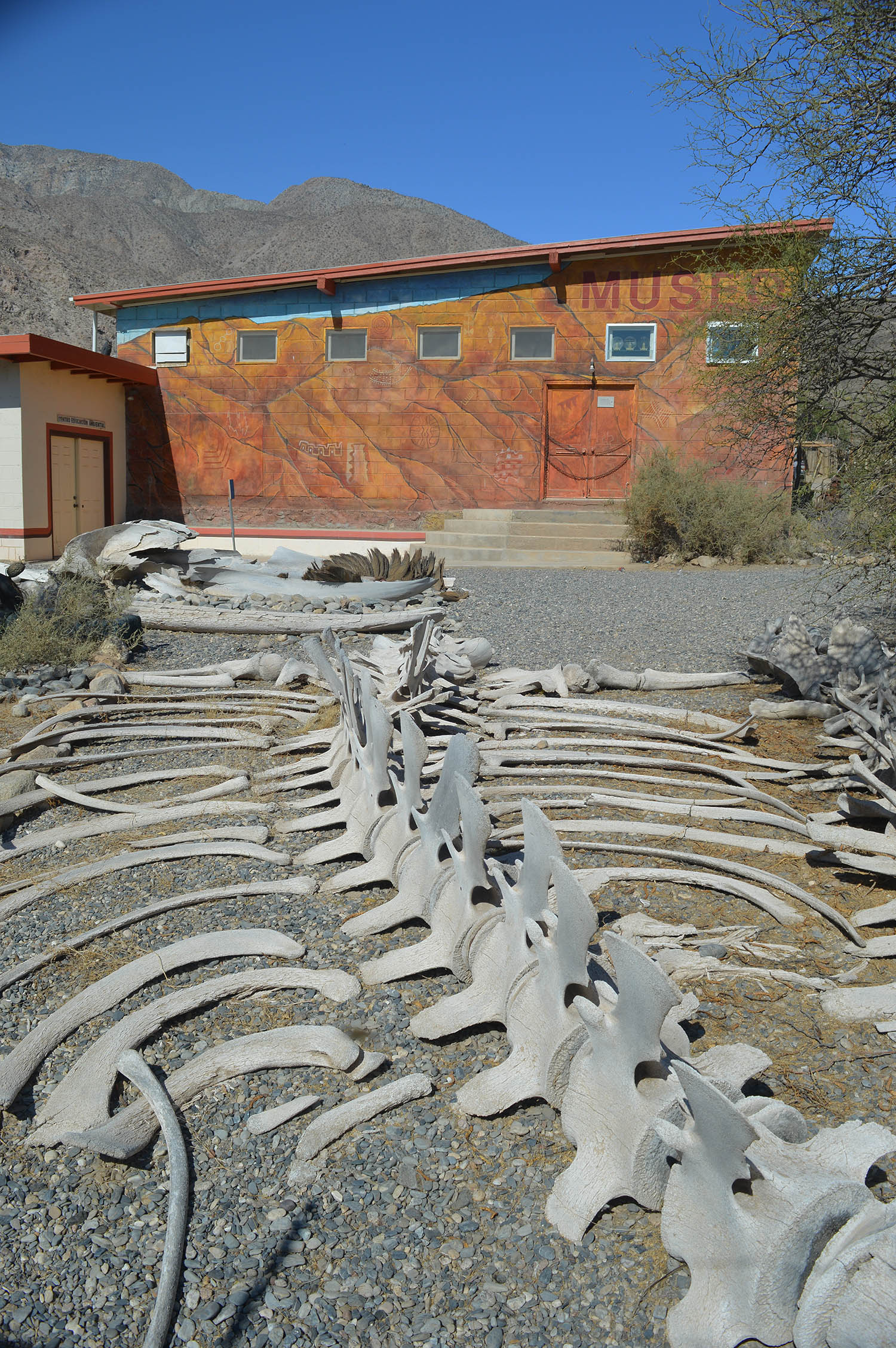 The Bahie de Los Angeles Natural History Musem. Whale bones in foreground.